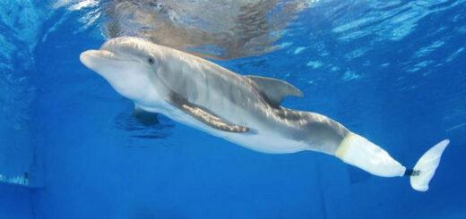 Winter, el delfin